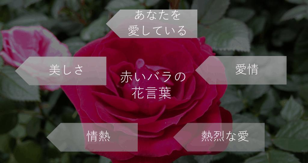 赤いバラの花言葉