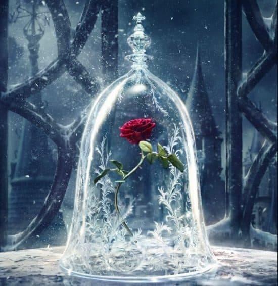 映画「美女と野獣」に登場! ガラスドーム入りのバラの意味とは?